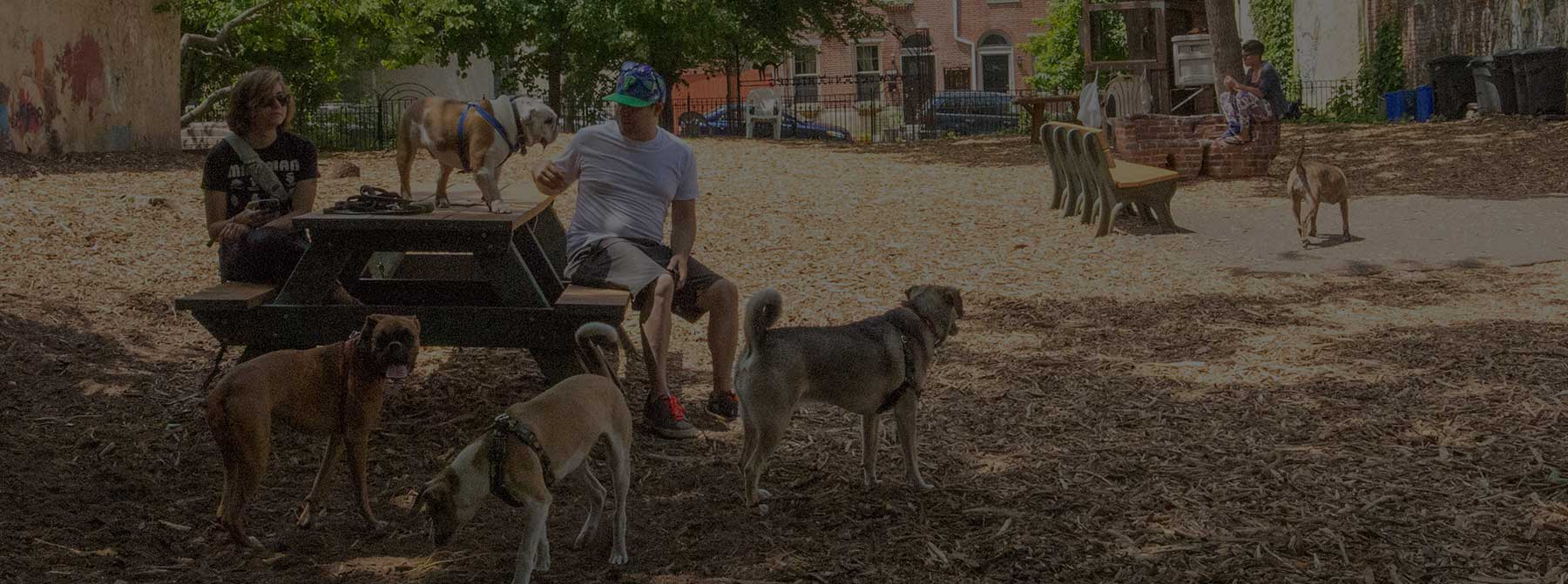 Dog Friendly Philly:  Northern Liberties & Fishtown